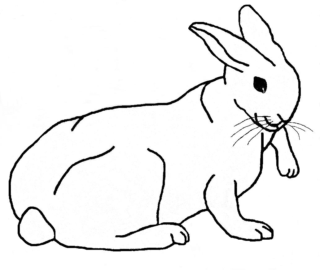 planse desene de colorat iepure 6