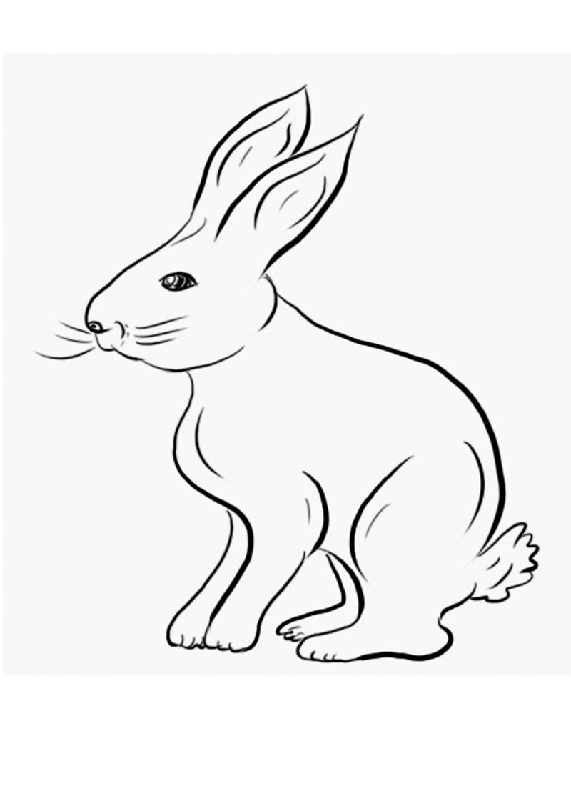 planse desene de colorat iepure 7