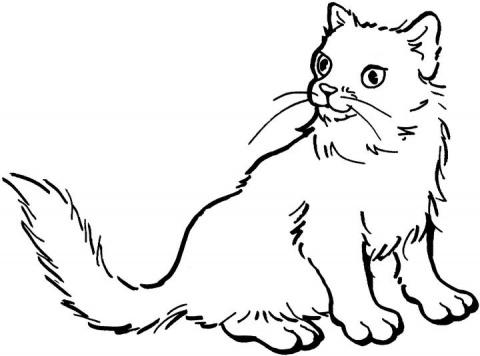 planse desene de colorat pisica 51