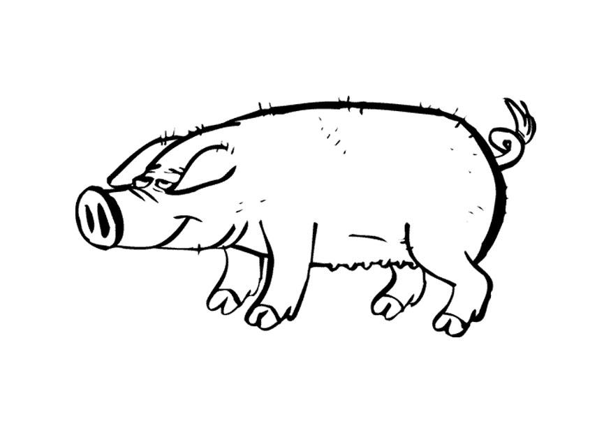 planse desene de colorat porc 15