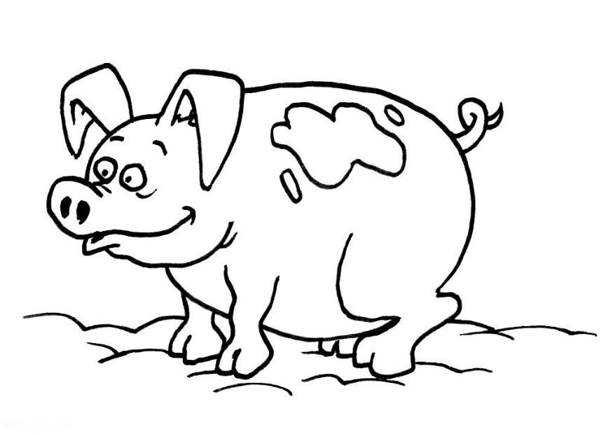 planse desene de colorat porc 16