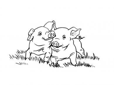 planse desene de colorat porc 21