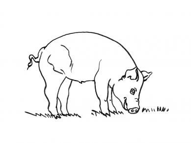 planse desene de colorat porc 22