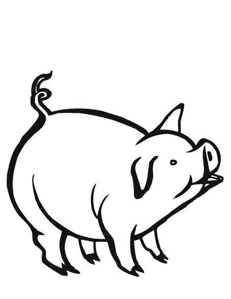 planse desene de colorat porc 5