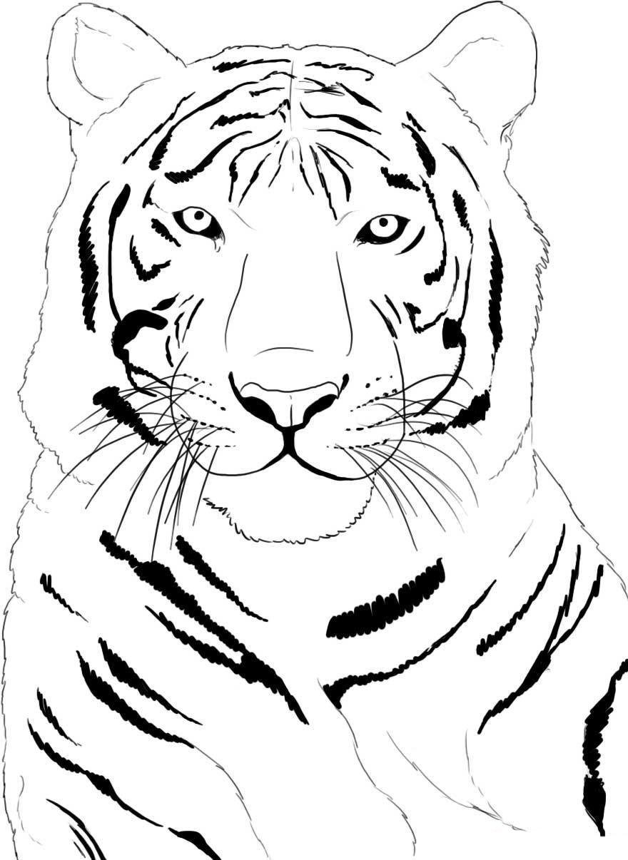 Tigru Planse De Colorat Si Educative