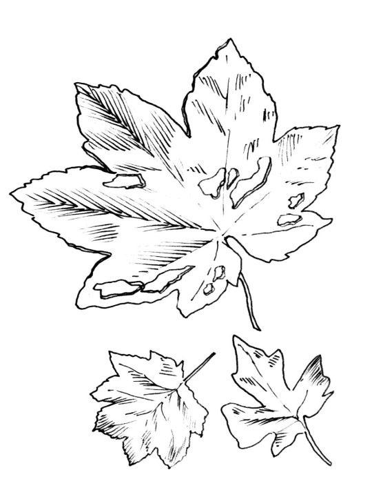 planse desene de colorat toamna frunze 23