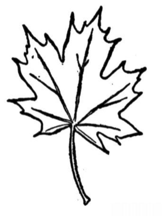 planse desene de colorat toamna frunze 25