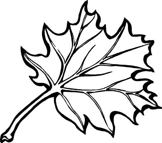 planse desene de colorat toamna frunze 30