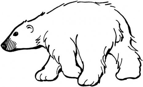 Urs polar Planse de colorat si educative