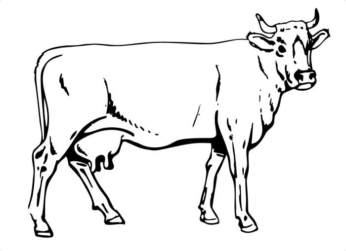 planse desene de colorat vaca 16