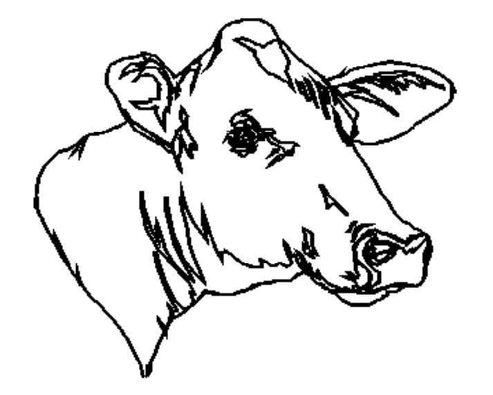 planse desene de colorat vaca 6